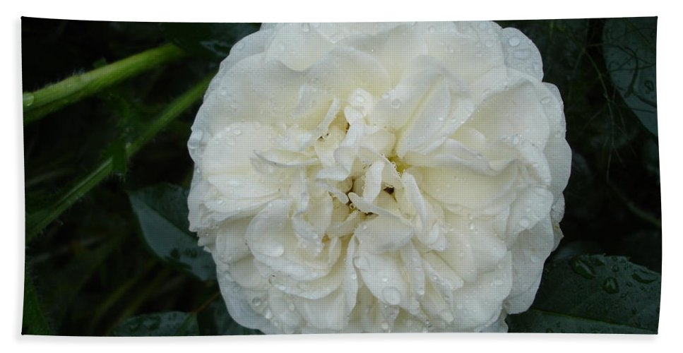 Rose Bath Sheet featuring the photograph Purity And Perfection by Susan Baker