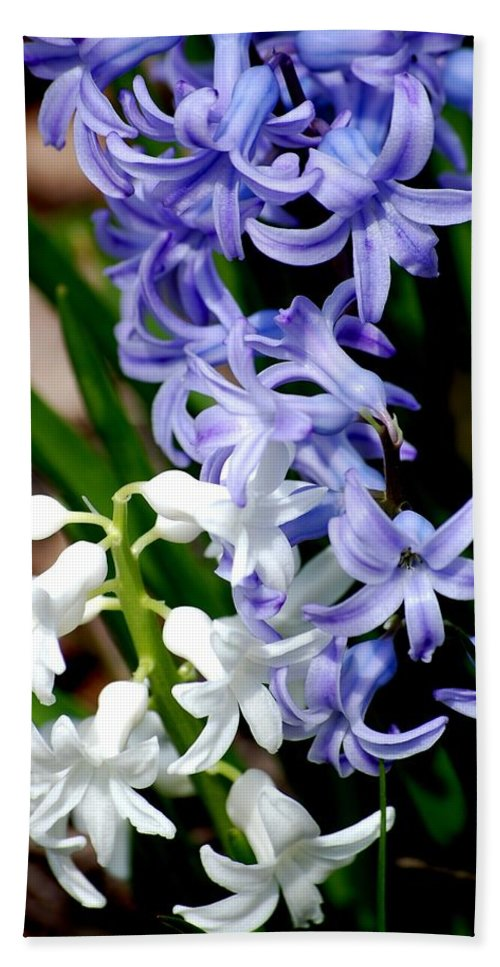 Digital Photography Bath Sheet featuring the photograph Purple And White Hyacinth by David Lane