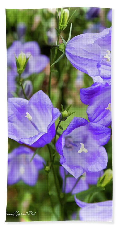 Purple Hand Towel featuring the photograph Purple Bell Flowers by Joann Copeland-Paul