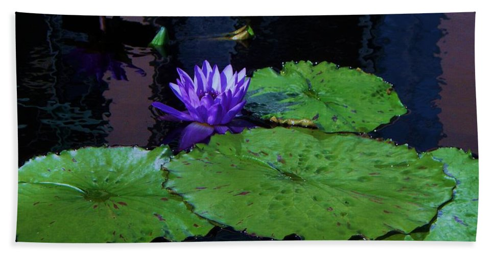 Photograph Bath Sheet featuring the photograph Purple Blue Lily by Eric Schiabor