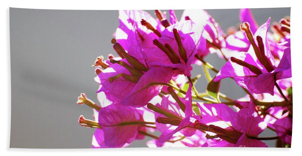 Bougainvillea Bath Sheet featuring the photograph Purple Bougainvillea Flower by Ersoy Basciftci