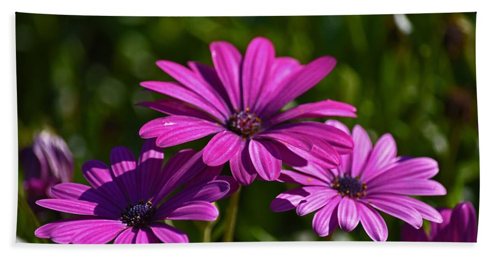Flowers Bath Sheet featuring the photograph Purple Bouquet by Maria Keady