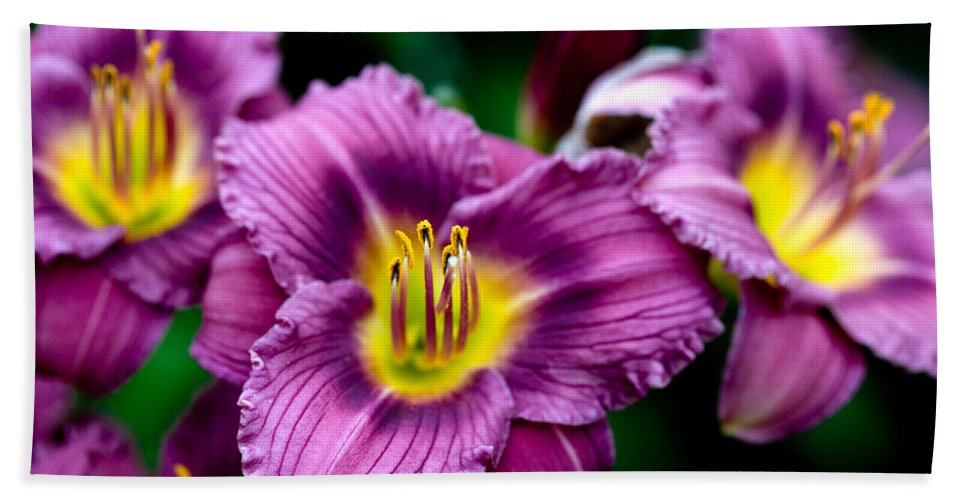 Flower Bath Towel featuring the photograph Purple Day Lillies by Marilyn Hunt