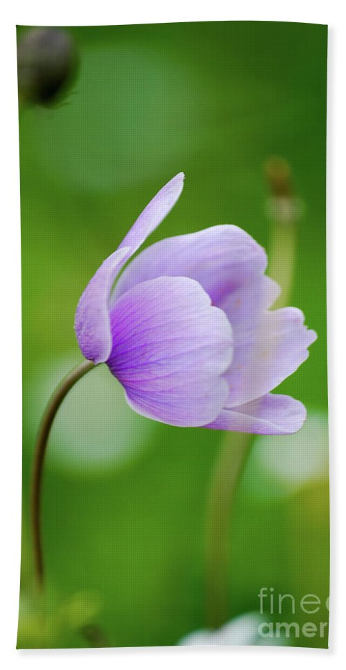 Purple Flower Bath Sheet featuring the photograph Purple Flower Looking Right Side by Ersoy Basciftci