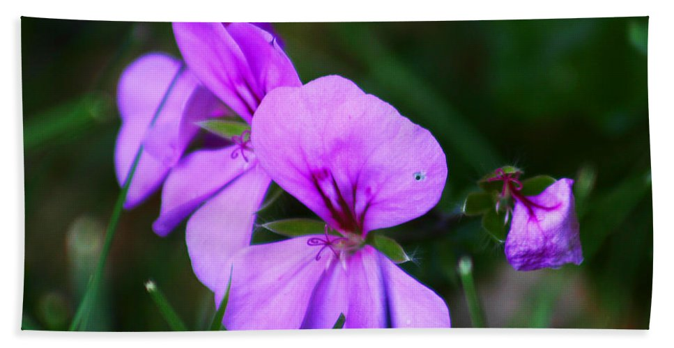 Flowers Bath Sheet featuring the photograph Purple Flowers by Anthony Jones