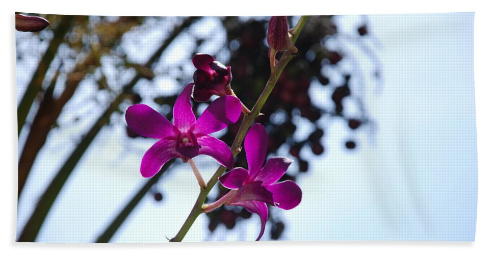 Macro Bath Towel featuring the photograph Purple Flowers In The Sky by Rob Hans