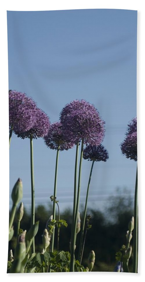 Flower Hand Towel featuring the photograph Purple Flowers by Sara Stevenson