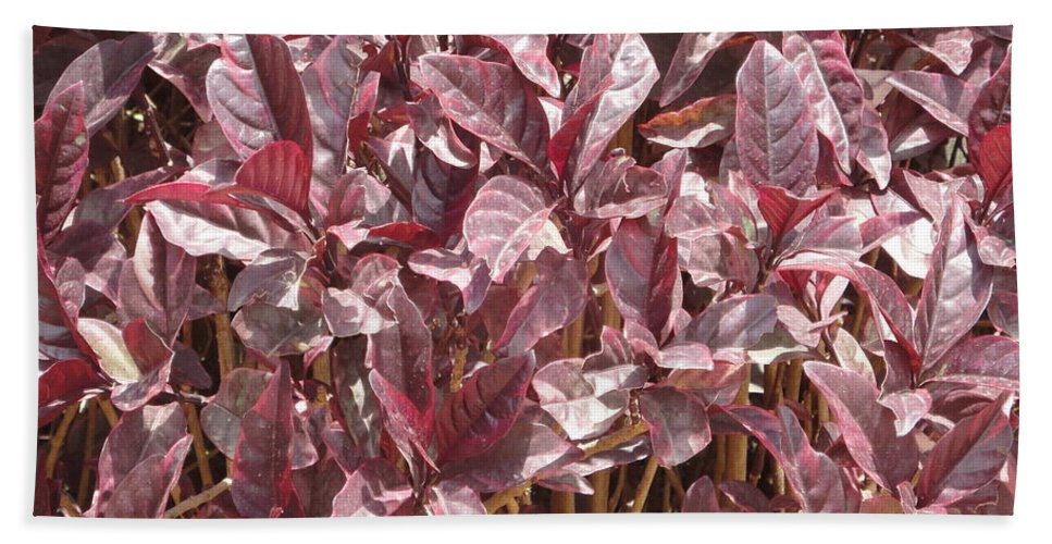 Purple Hand Towel featuring the photograph Purple Foliage by Usha Shantharam