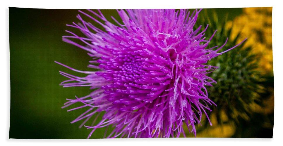 Purple Bath Sheet featuring the photograph Purple Fringe by Grace Grogan
