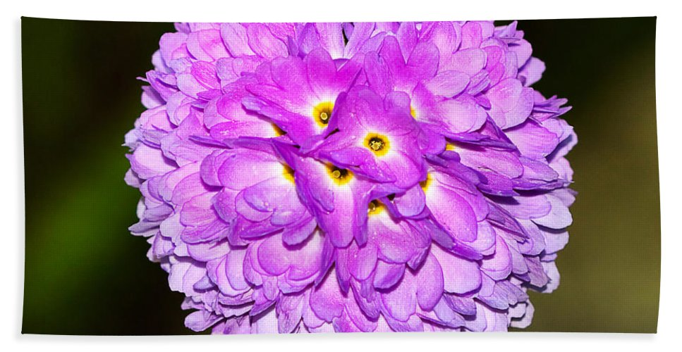 Flower Hand Towel featuring the photograph Purple Himalayan Primrose by Louise Heusinkveld
