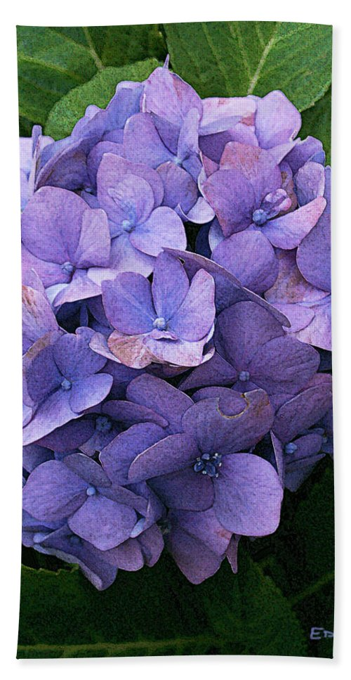 Flowers Bath Sheet featuring the photograph Purple Hydrangea by Ed A Gage