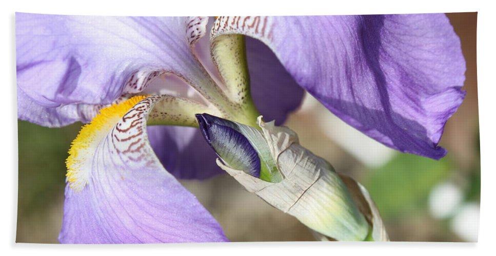 Iris Hand Towel featuring the photograph Purple Iris With Focus On Bud by Carol Groenen