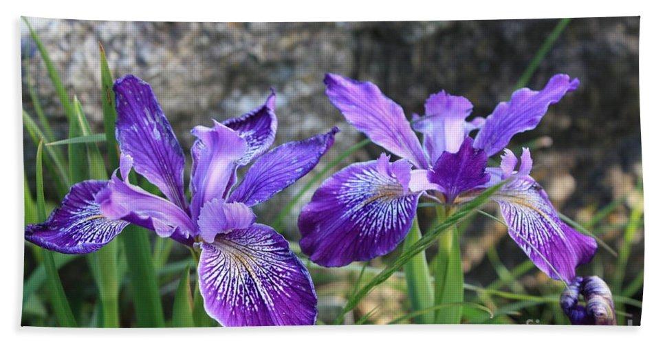 Purple Bath Towel featuring the photograph Purple Irises With Gray Rock by Carol Groenen