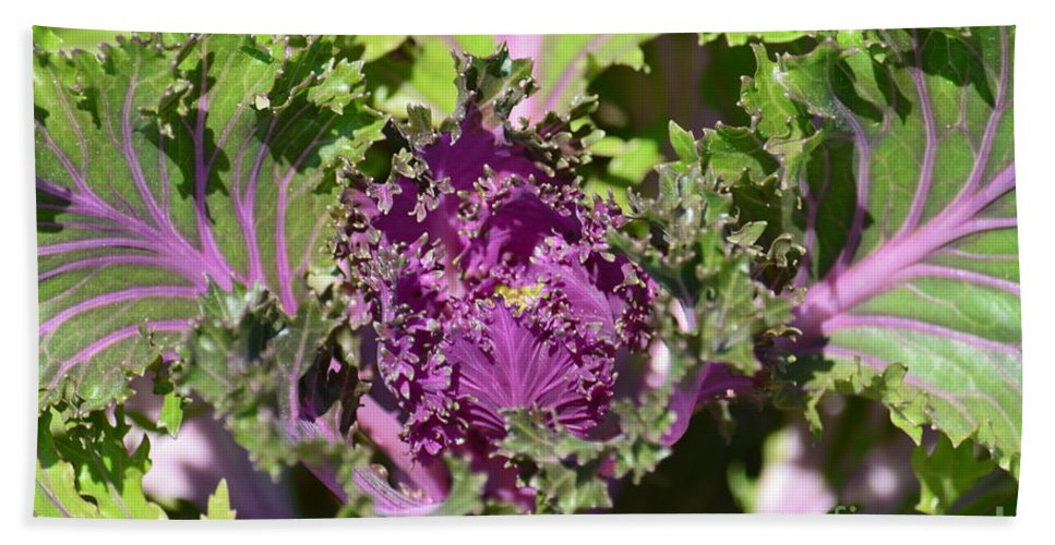Purple Kale Hand Towel featuring the photograph Purple Kale by Maria Urso