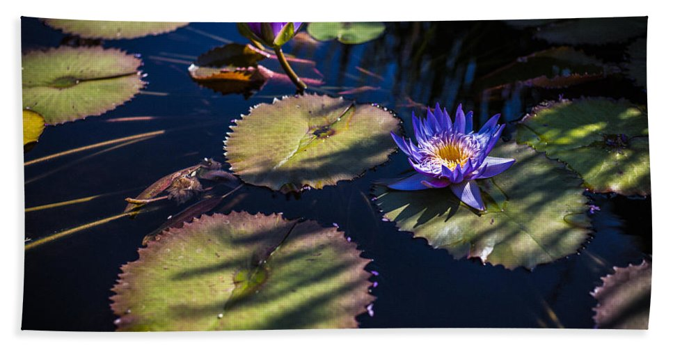 Flowers Bath Sheet featuring the photograph Purple Lily by Jason Roberts