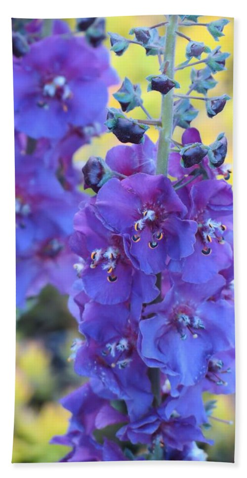 Mullein Bath Sheet featuring the photograph Purple Mullein by MTBobbins Photography