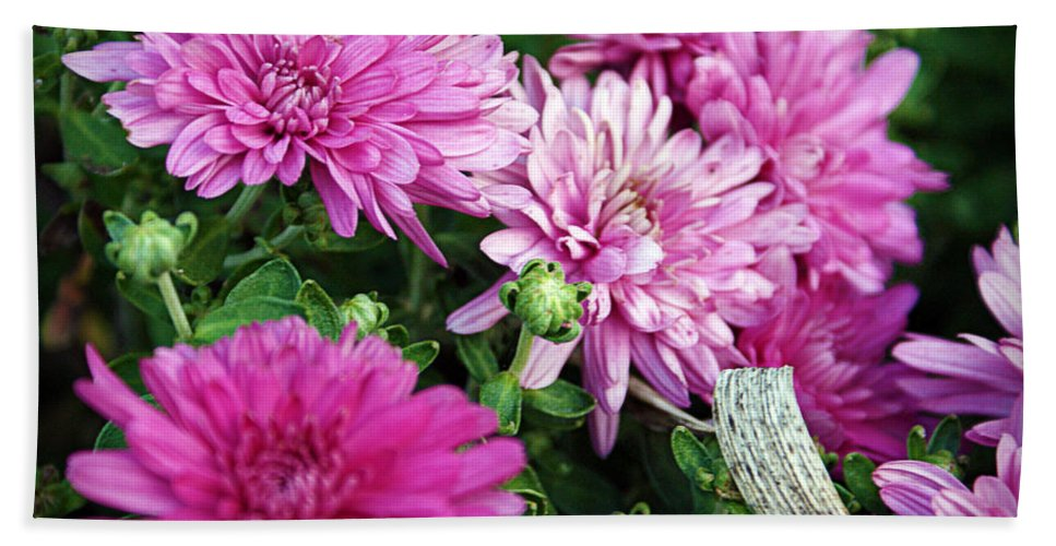 Flowers Bath Sheet featuring the photograph Purple Mums by Cricket Hackmann