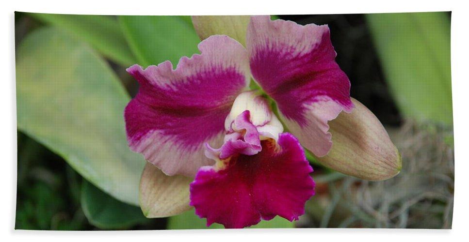 Macro Bath Towel featuring the photograph Purple Orchid by Rob Hans