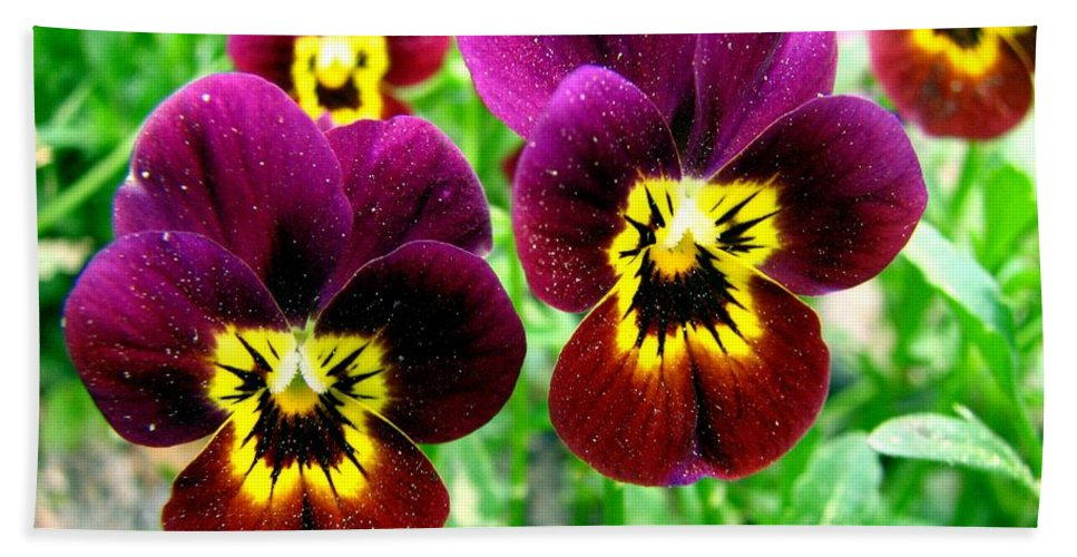 Pansies Bath Sheet featuring the photograph Purple Pansies by J M Farris Photography