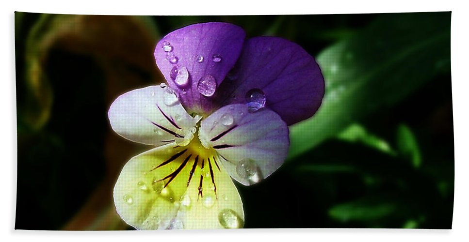 Flower Hand Towel featuring the photograph Purple Pansy by Anthony Jones