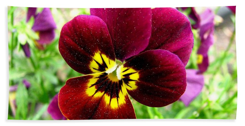 Pansies Bath Sheet featuring the photograph Purple Pansy by J M Farris Photography
