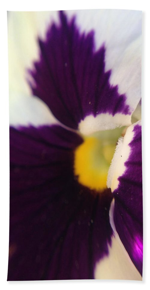 White Hand Towel featuring the photograph Purple Pansy by Michelle Ngaire