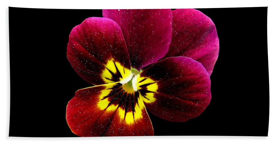 Pansies Bath Sheet featuring the photograph Purple Pansy On Black by J M Farris Photography