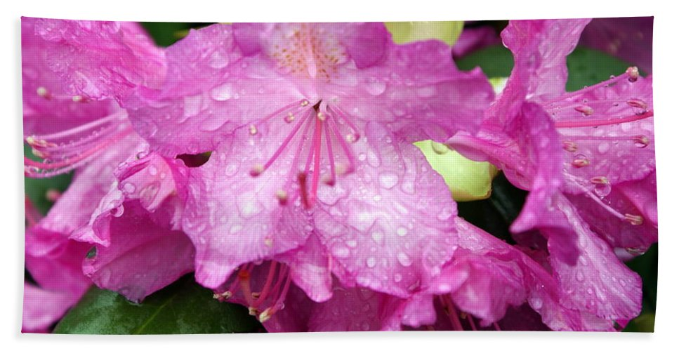 Flowers Bath Towel featuring the photograph Purple Pink Horizontal by Marty Koch