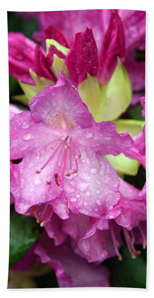 Fllowers Bath Towel featuring the photograph Purple Pink by Marty Koch
