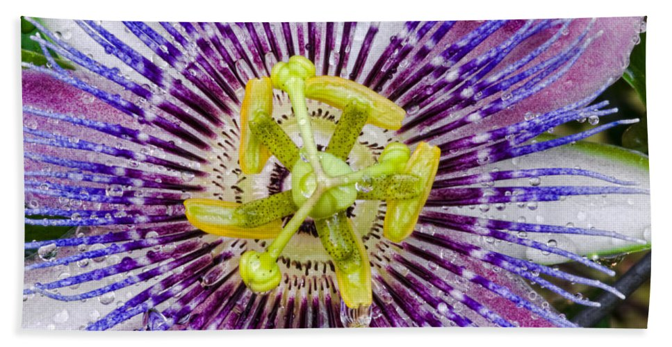 Passion Bath Towel featuring the photograph Purple Radial by Christopher Holmes