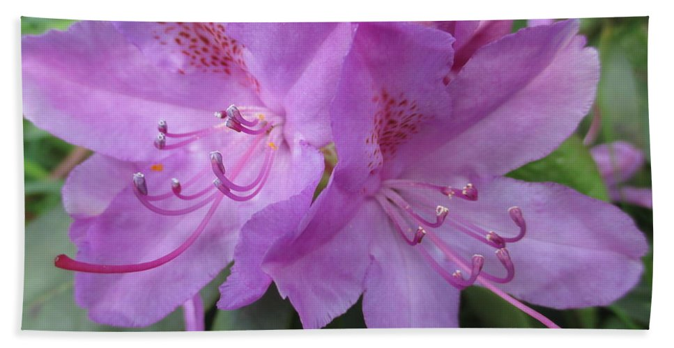 Purple Rhododendron Hand Towel featuring the photograph Purple Rhododendron by Martin Howard