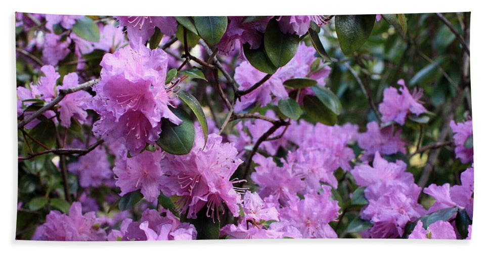 Spring Hand Towel featuring the photograph Purple Rhododendrons by Carol Groenen