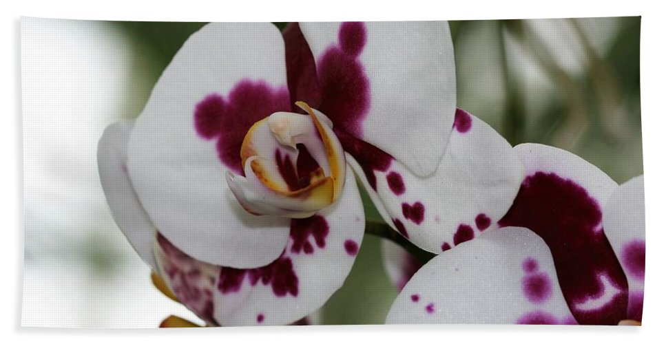 Bath Sheet featuring the photograph Purple Splash Orchid 3 by Kristina Jones