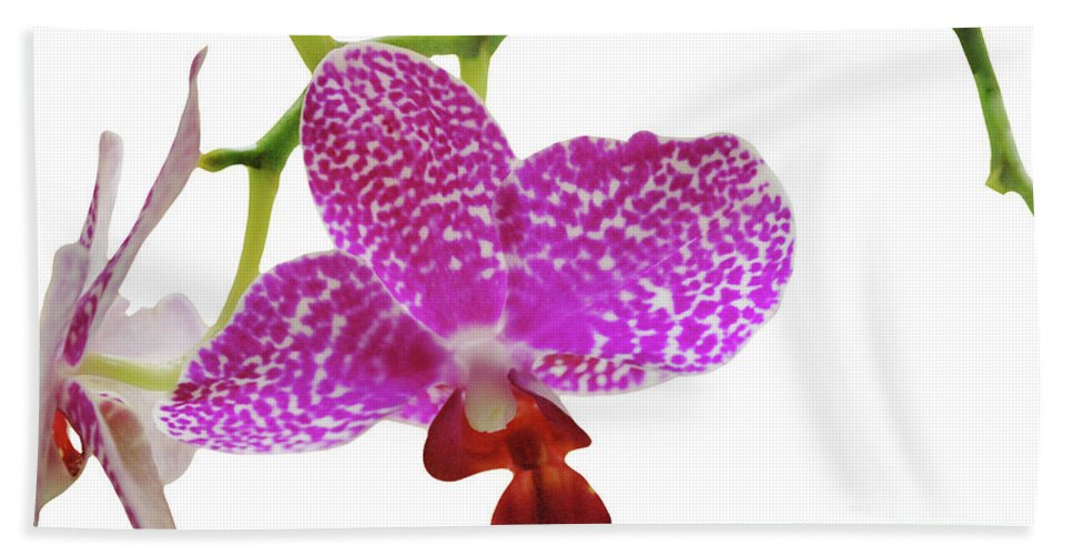 Phalaenopsis Bath Sheet featuring the photograph Purple Spotted Orchid On White by Heather Kirk