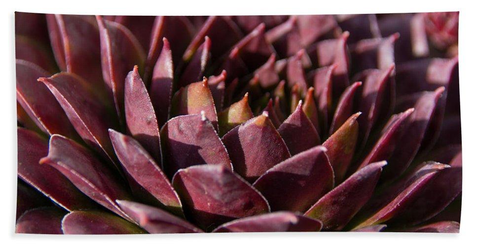 Succulent Bath Sheet featuring the photograph Purple Succulent by Susan Wright