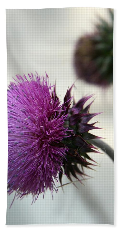 Thistle Hand Towel featuring the photograph Purple Thistle by Christiane Schulze Art And Photography