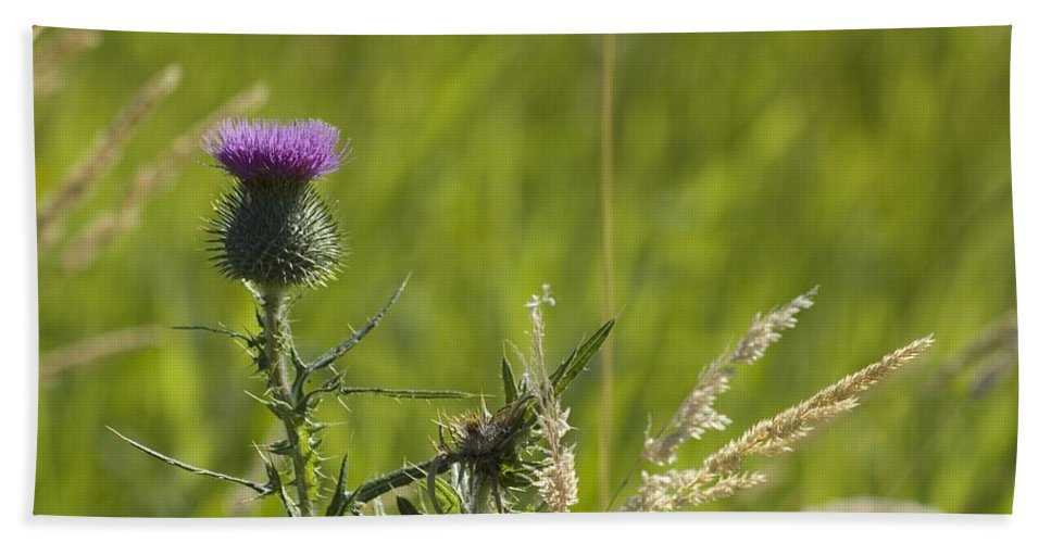 Thistle Hand Towel featuring the photograph Purple Thistle by Sara Stevenson