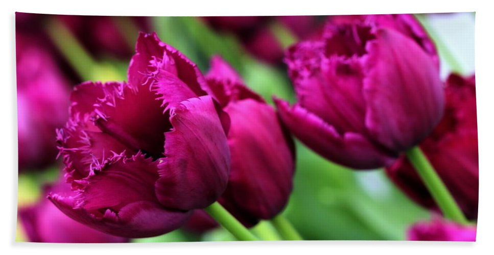 Purple Hand Towel featuring the photograph Purple Tulips by Angela Rath