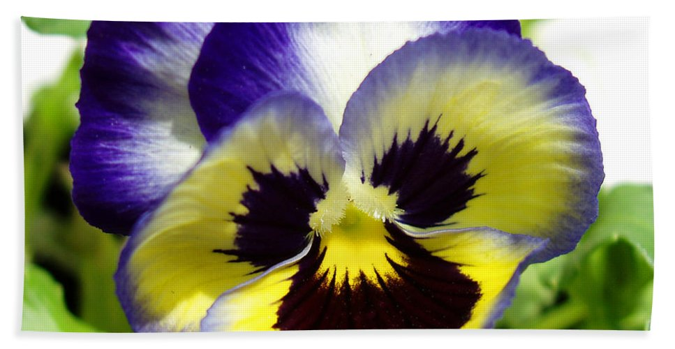 Pansy Bath Sheet featuring the photograph Purple White And Yellow Pansy by Nancy Mueller