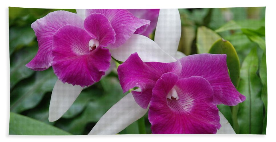Macro Bath Towel featuring the photograph Purple White Orchids by Rob Hans