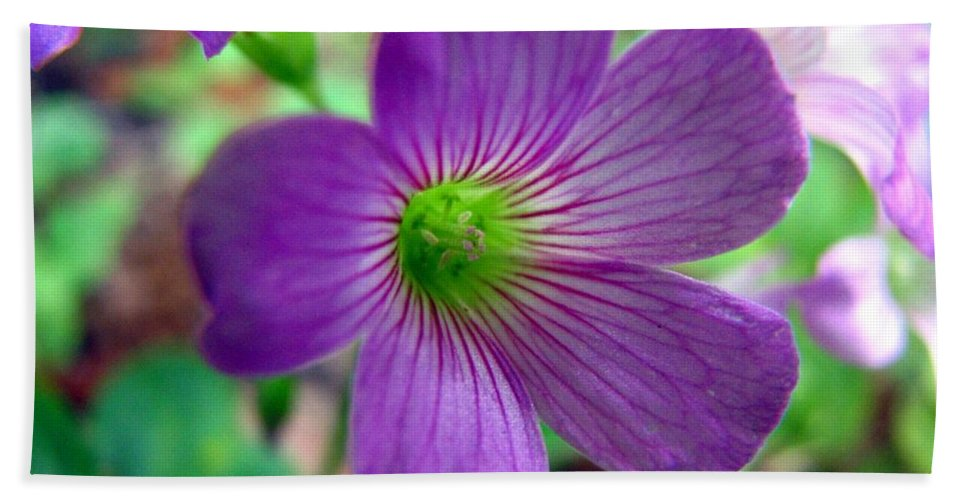 Wildflowers Bath Sheet featuring the photograph Purple Wildflowers Macro 1 by J M Farris Photography