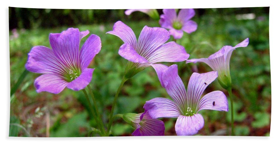 Wildflowers Bath Sheet featuring the photograph Purple Wildflowers Macro 2 by J M Farris Photography