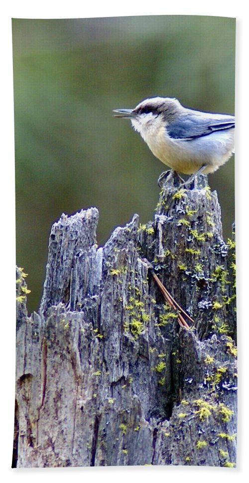 Birds Bath Sheet featuring the photograph Pygmy Nuthatch by Ben Upham III