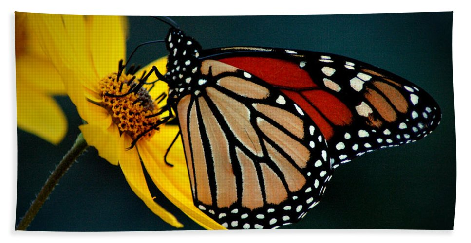 Queen Hand Towel featuring the photograph Queen Monarch 2 by David Weeks