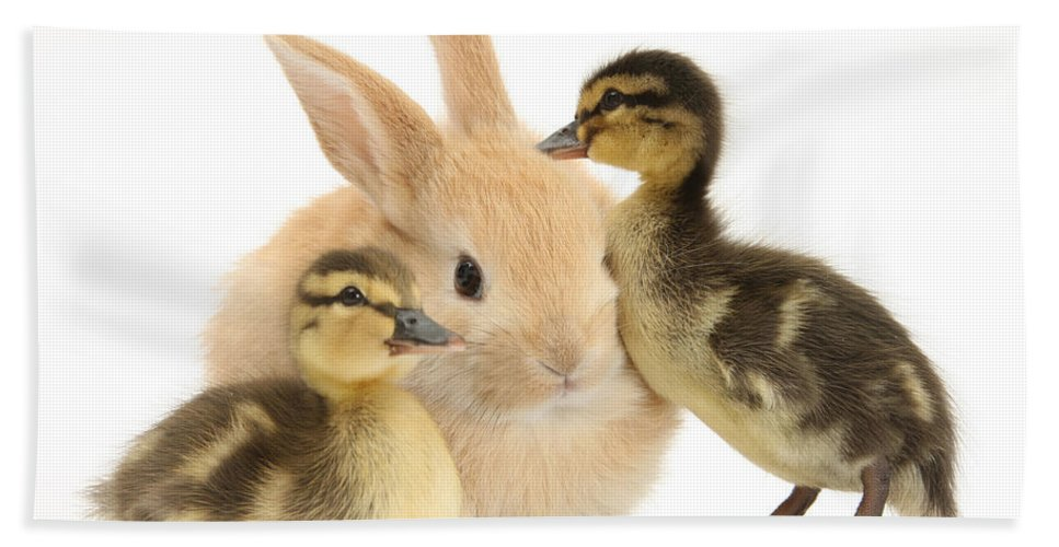 Animal Hand Towel featuring the photograph Rabbit And Ducklings by Mark Taylor