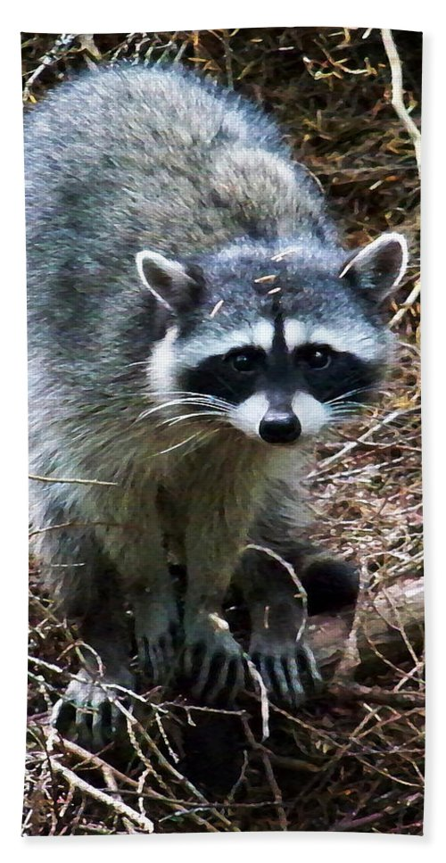 Painting Hand Towel featuring the photograph Raccoon by Anthony Jones