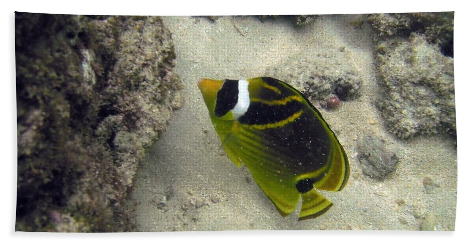 Hanauma Bay Hand Towel featuring the photograph Raccoon Butterflyfish by Michael Peychich