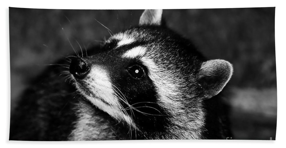 Raccoon Hand Towel featuring the photograph Raccoon Looking by David Lee Thompson