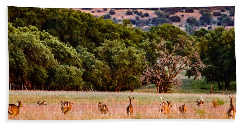 Whitetail Bath Sheet featuring the photograph Nine Racing Whitetail Deer by Jeanie Mann