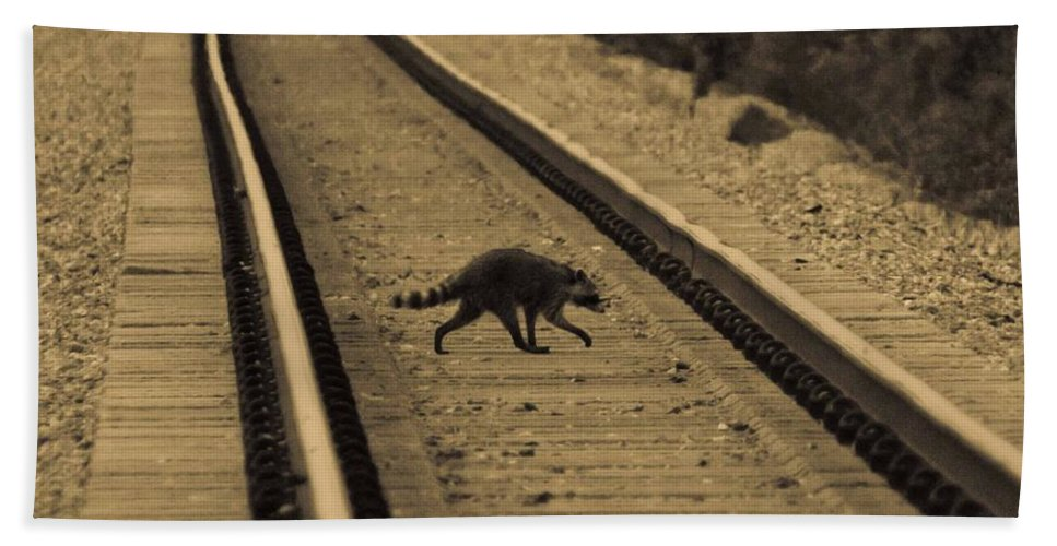 Raccoon Bath Sheet featuring the photograph Railroad Bandit by DigiArt Diaries by Vicky B Fuller